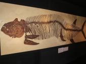 Fossil Hut