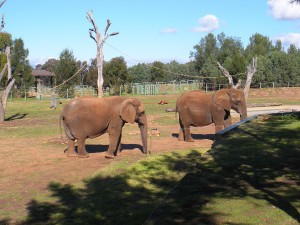 Dubbo - Taronga Western Plains Zoo
