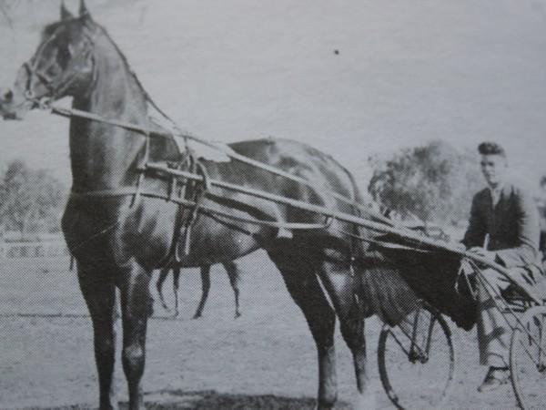 Harness Racing - early 1900s
