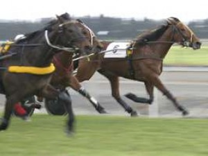 Peak Hill Harness Racing - 2021 TBA due to Covid pandemic